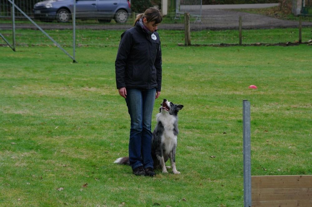 Autour des chiens 29 Quimper Morgan Rolland et Aries
